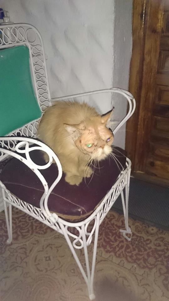 Olivia la cat woman madrile a que rescat 20 gatos for Banco 0081 oficinas