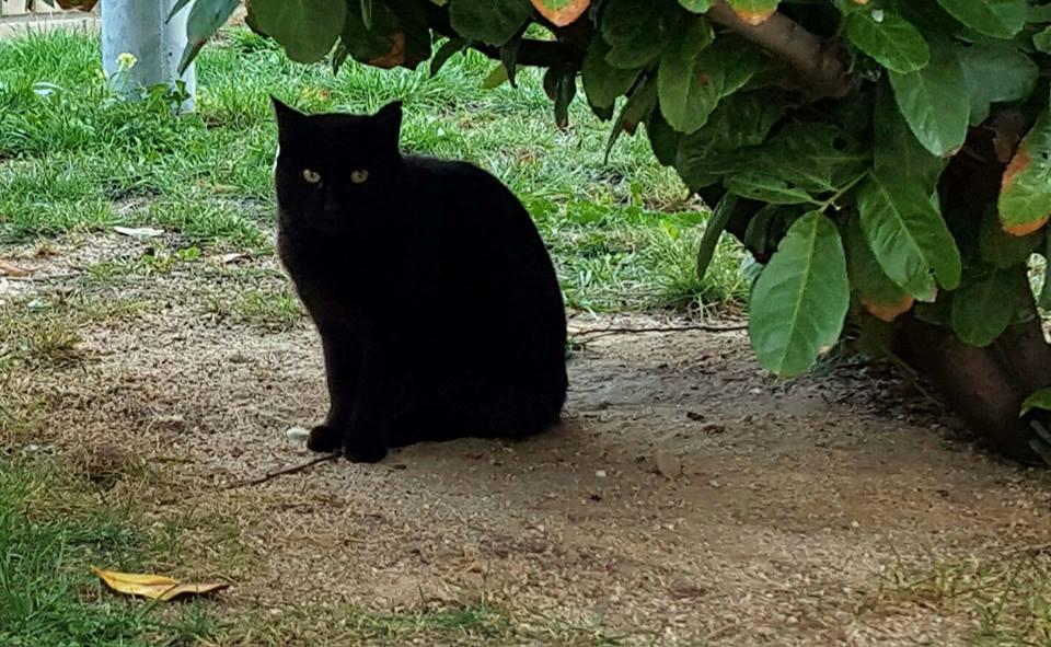 Esterilizaciones de 6 gatos de tara verde for Banco 0081 oficinas